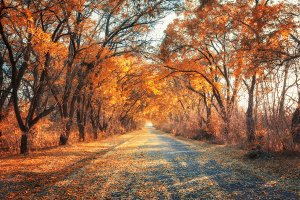 Autumn forest with road at sunset
