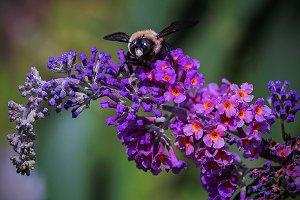 Bigger Bees
