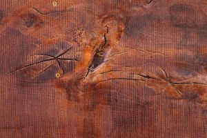 texture of bark wood