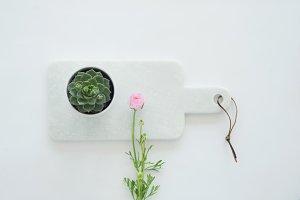 Stock photo with plants