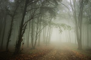 Forest road with mysterious fog
