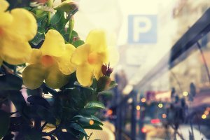 Yellow flowers on a street