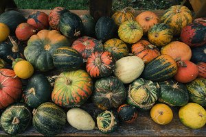 Halloween pumpkins in autumn