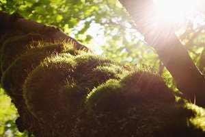 Beauty and the Moss