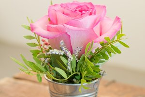 Rose in small bucket