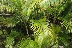 Lush, Green Jungle Plants