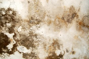 Mold Fungus Background