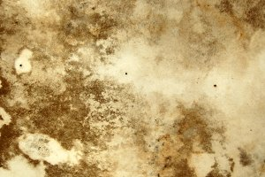 Mold Background Texture