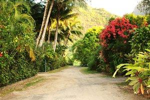 Beautiful Hawaiian Pathway