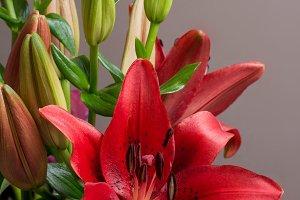 Lilium Orient red flower