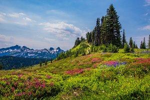 Meadow of Color