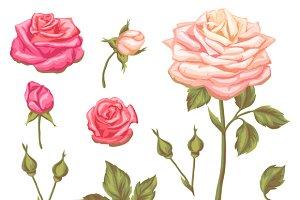 Set of vintage roses.