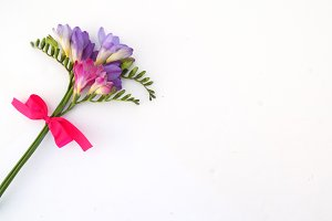 Freesia Collection Stems