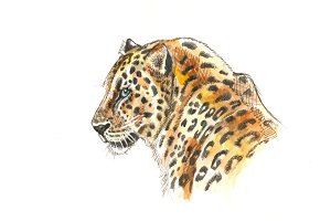 Wild leopard watercolor portrait