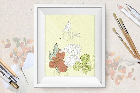 Spring flowers. Iris flower - Illustrations