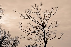 Sepia Tree Branches