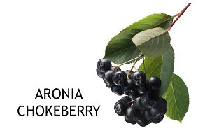 Aronia-black chokeberry