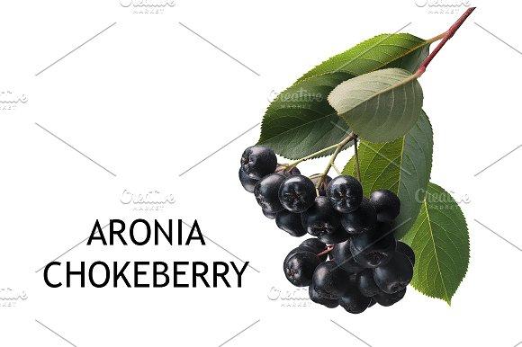 Aronia-black chokeberry