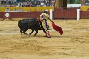 Bullfighter in the bullring.
