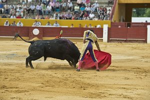 Bullfighter in the arena