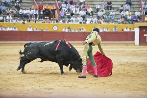 Typical bullfight.