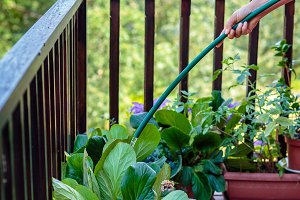 woman hand watering plants