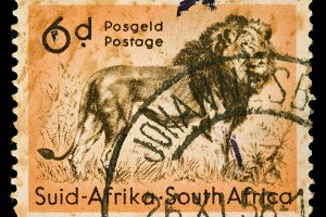 African Lion Postage Stamp