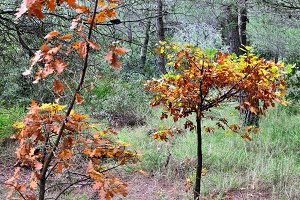 Autumn Colors Forest Trees