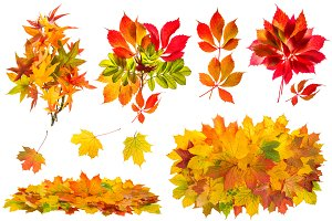 Red and yellow leaves JPG
