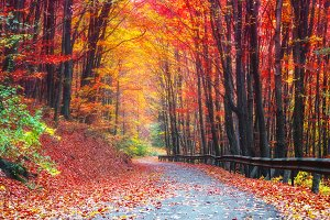 Alley of red trees