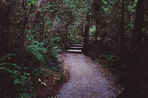 Nature's steps