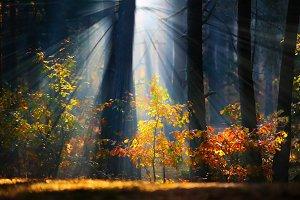 Shady forest