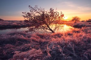 Pink winter sunrise