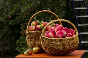 Red apples in wooden wicker basket