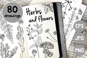 Herbs and flowers