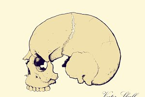 skull in profile