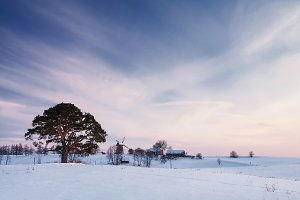 Winter rural landscape with pine