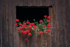 Flowers decoration on wooden cottage