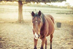 Horsey friend