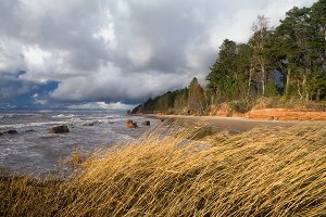 Sea storm Red Cliff shore and reed