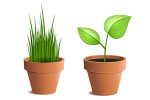 Green Plant in Pot Set