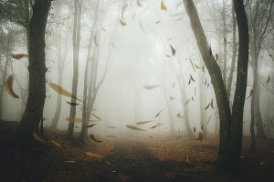 Autumn leaves falling in forest