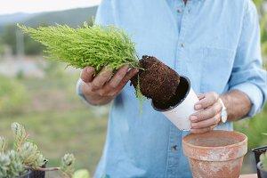 Planting some plant