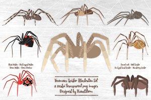 Venomous Spider Illustrations