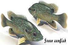 Green sunfish by  in Animals