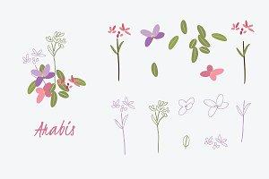№169 Spring mood. Arabis