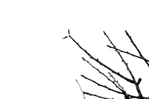 Branches Silhouette