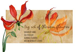 Watercolor gloriosa flowers kit.