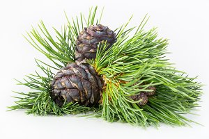Buckets with cedar cones