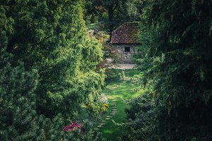 Old cottage in the forest